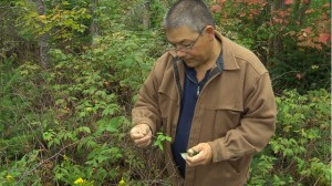 Stephen Marshall, a Mi'kmaq from the Millbrook First Nation, gathers wild edibles.